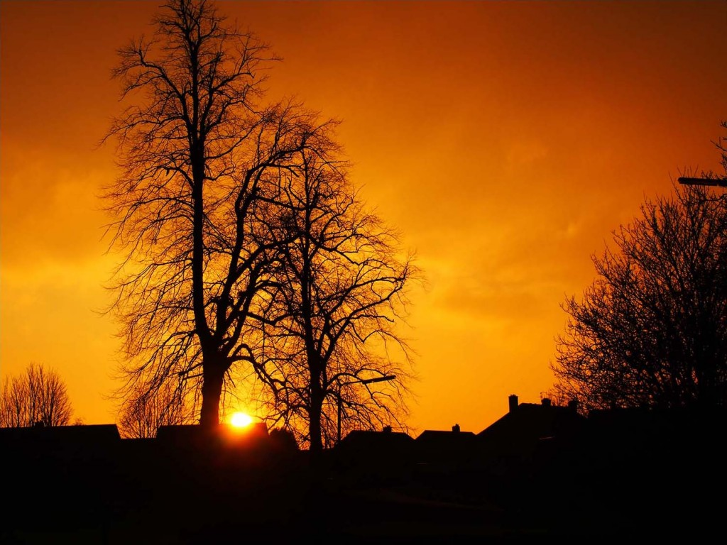 Sunset through trees, winter in Scotland