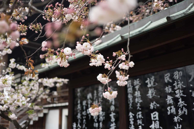 Cherry Blossom time & sparking joy with Marie Kondo
