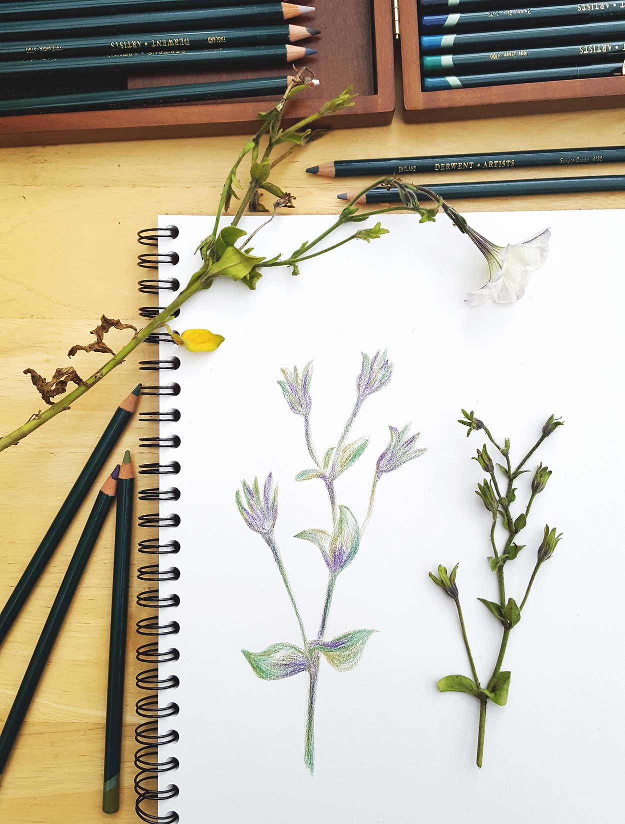 Finding inspiration: sketching flowers
