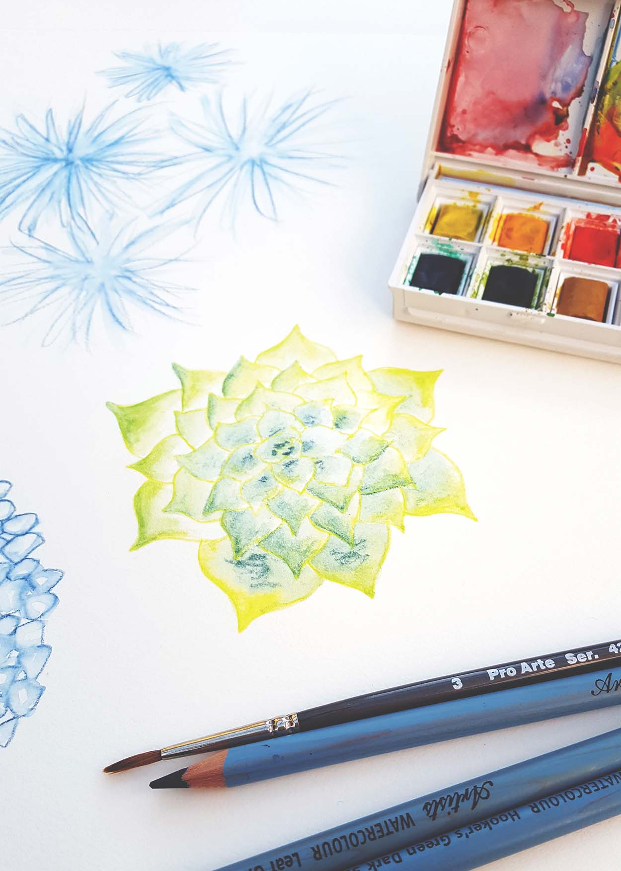 Finding inspiration: succulent sketch