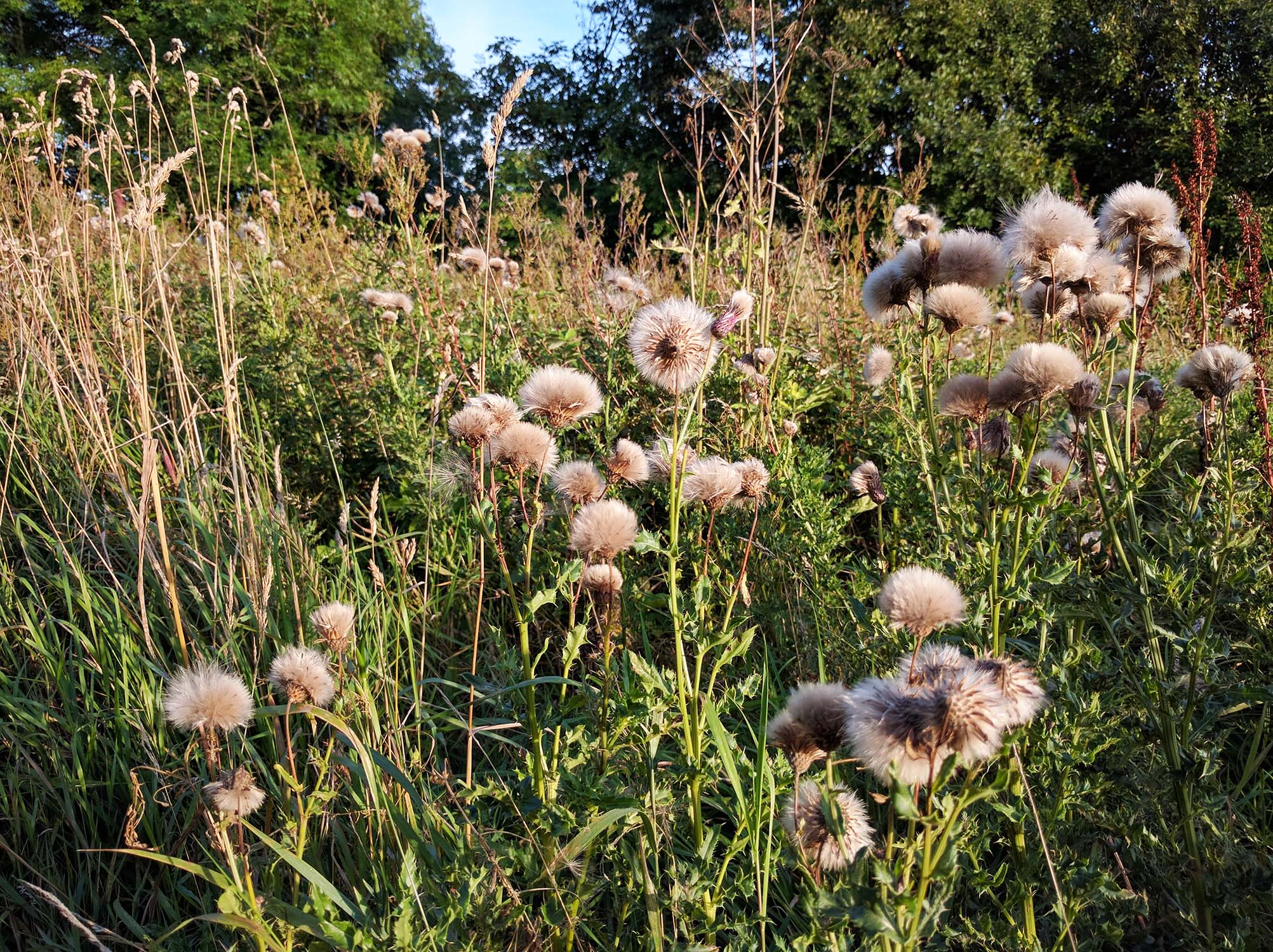 Finding inspiration: wild flowers