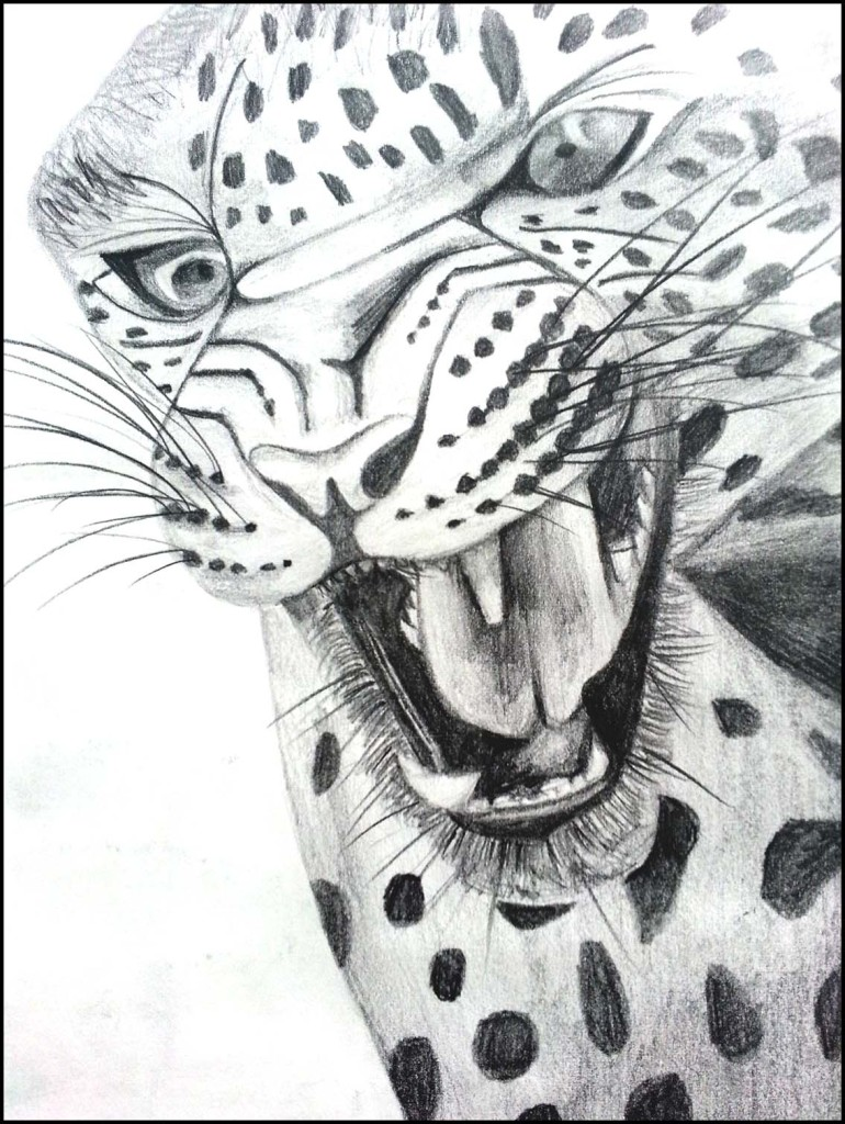 Pencil drawing - leopard