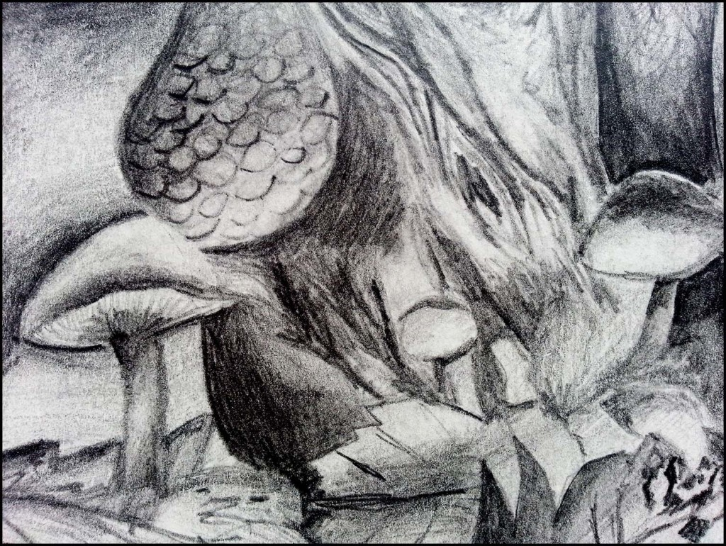 'Toadstools' pencil drawing